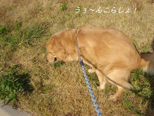 日本庭園(芦城公園)の散歩_f0114128_210612.jpg