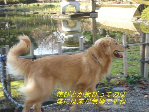 日本庭園(芦城公園)の散歩_f0114128_2110032.jpg