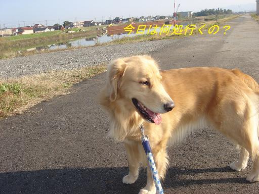 日本庭園(芦城公園)の散歩_f0114128_211254.jpg