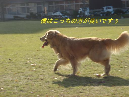日本庭園(芦城公園)の散歩_f0114128_2118656.jpg