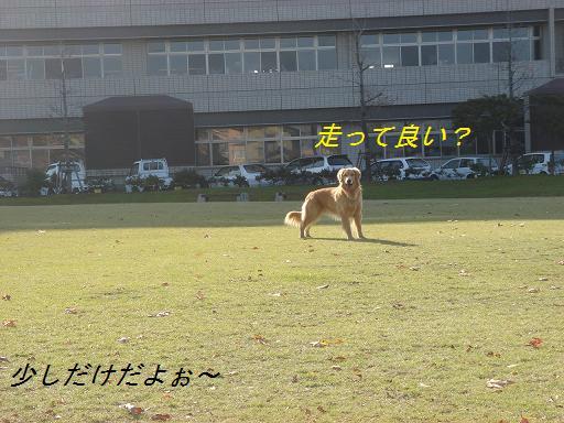 日本庭園(芦城公園)の散歩_f0114128_21191820.jpg