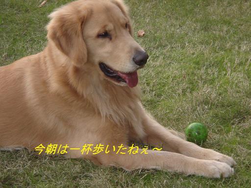日本庭園(芦城公園)の散歩_f0114128_2121516.jpg
