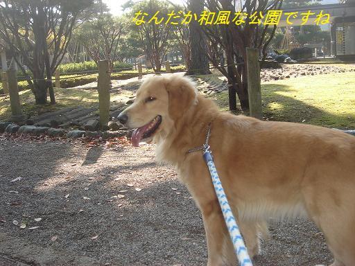 日本庭園(芦城公園)の散歩_f0114128_212516.jpg
