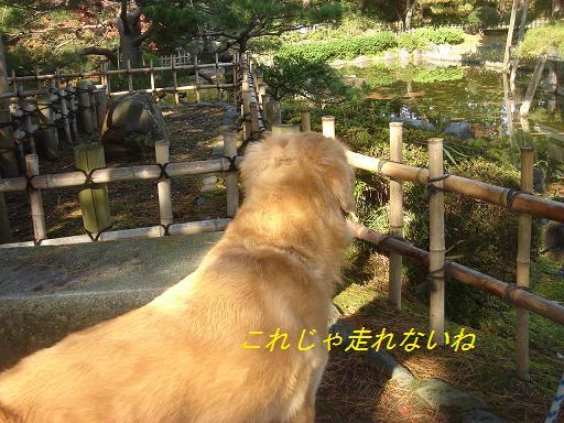 日本庭園(芦城公園)の散歩_f0114128_2153669.jpg