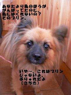 a0091865_22135552.jpg