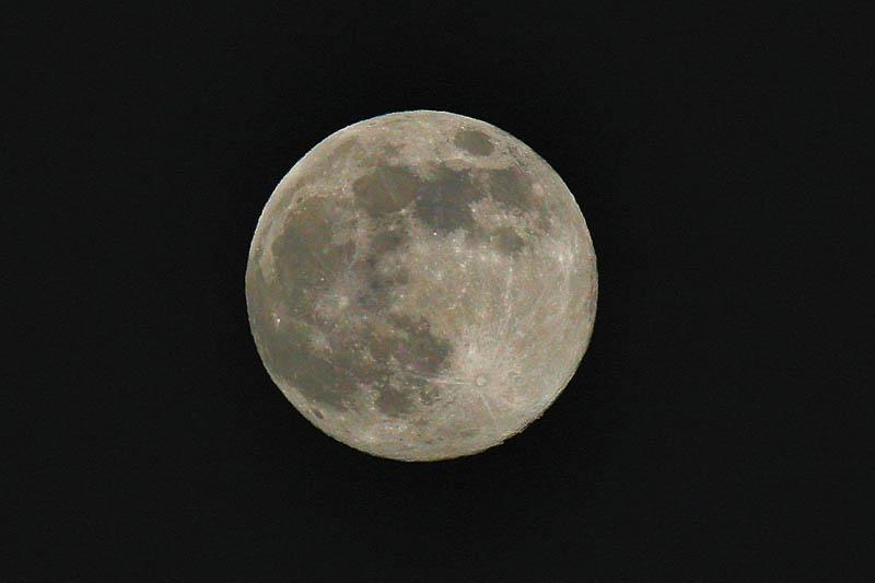 モズ/昨夜の望月_b0024798_6585712.jpg