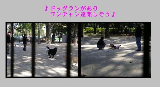 b0085815_16171284.jpg