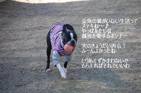 d0078616_15525024.jpg