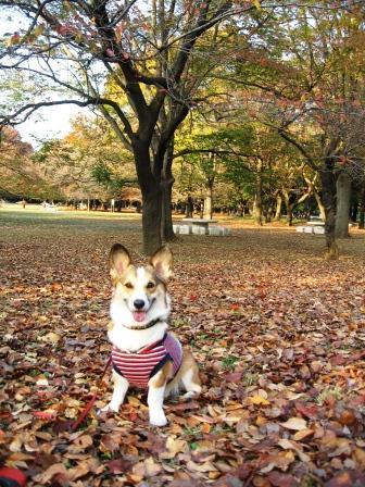 紅葉を見に… ~光が丘公園_f0155118_091651.jpg