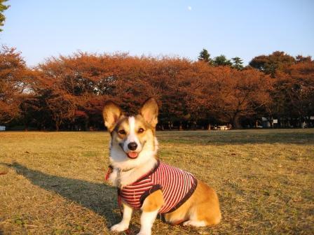 紅葉を見に… ~光が丘公園_f0155118_095856.jpg