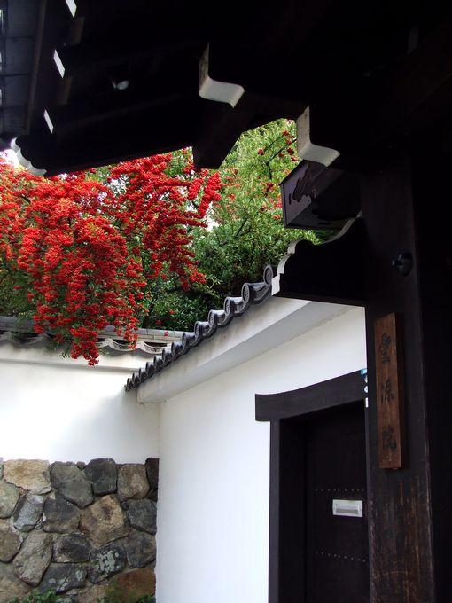 「紅葉の東福寺・・・Ⅰ」_d0133024_20541235.jpg