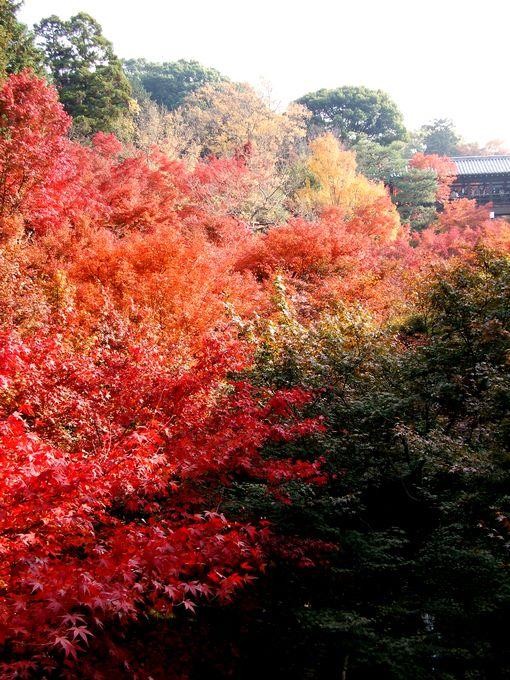 「紅葉の東福寺・・・Ⅰ」_d0133024_20553952.jpg