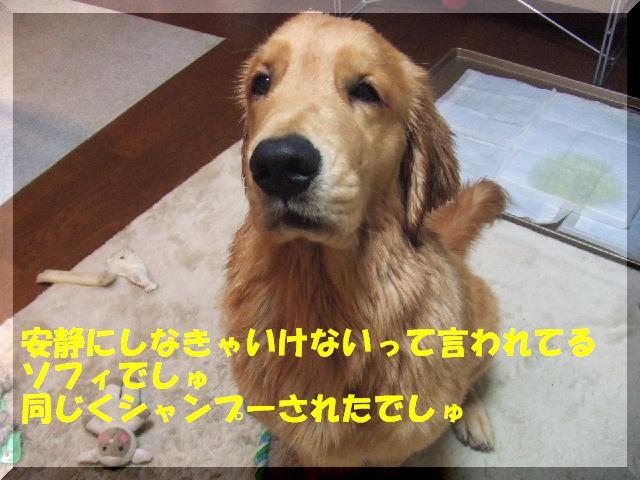 a0105425_23251192.jpg