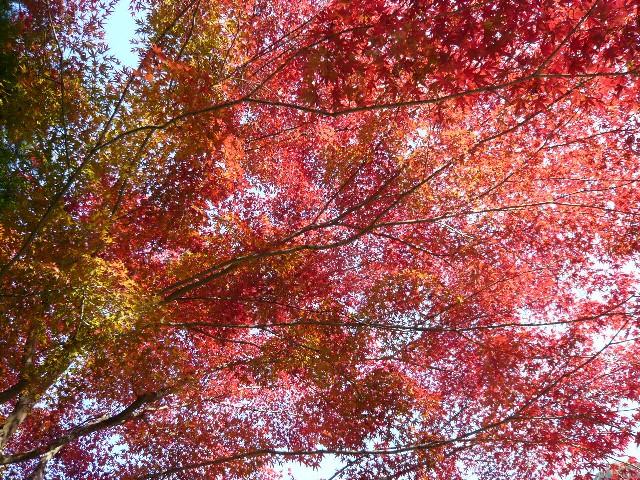 秋を感じに、御岳渓谷へ!_b0023328_19473493.jpg