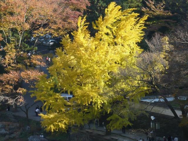 秋を感じに、御岳渓谷へ!_b0023328_19475181.jpg