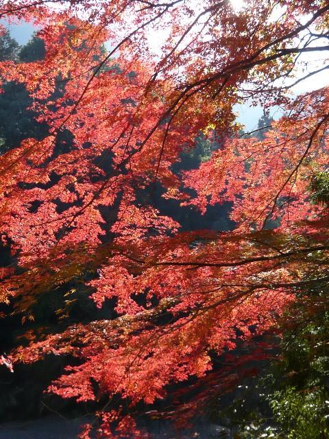 秋を感じに、御岳渓谷へ!_b0023328_1948443.jpg