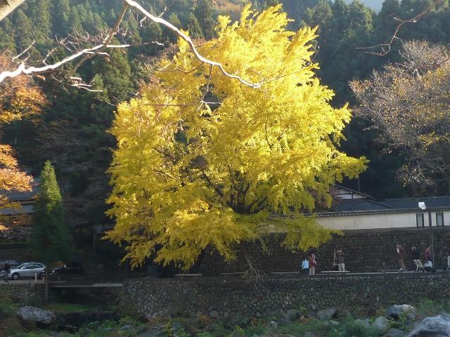 秋を感じに、御岳渓谷へ!_b0023328_1948650.jpg