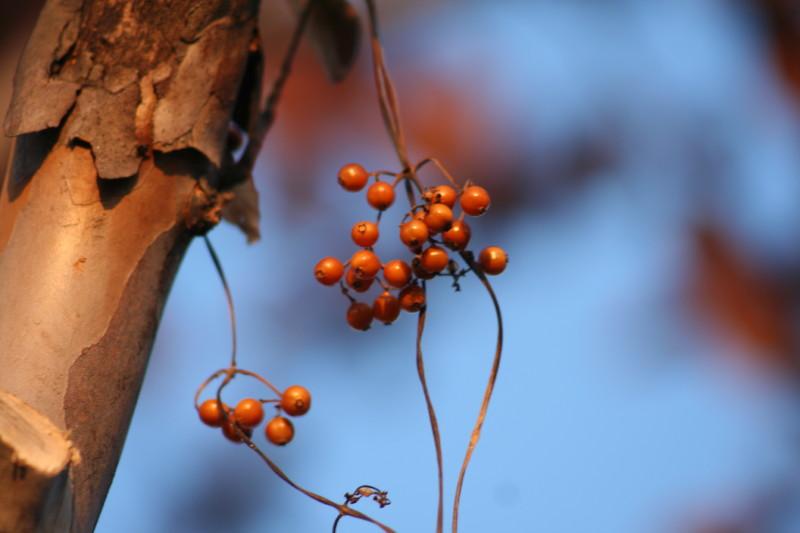 秋の瞳_f0017530_19594048.jpg