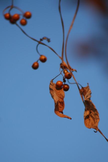 秋の瞳_f0017530_2005343.jpg