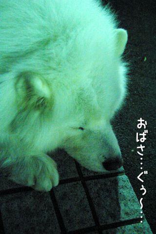 修行の旅~完結編~_c0062832_17151018.jpg