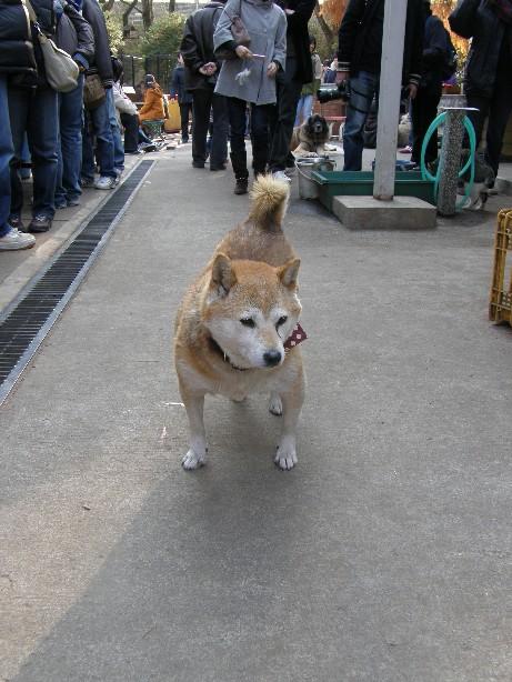 東京での王国ラスト訪問 その2_f0128542_2325146.jpg