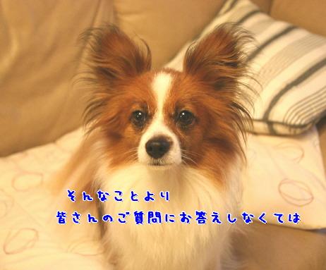 d0013149_1234511.jpg