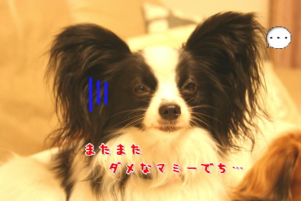 d0013149_139477.jpg