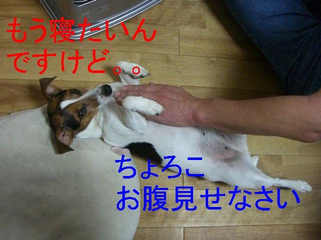 f0053952_13113366.jpg