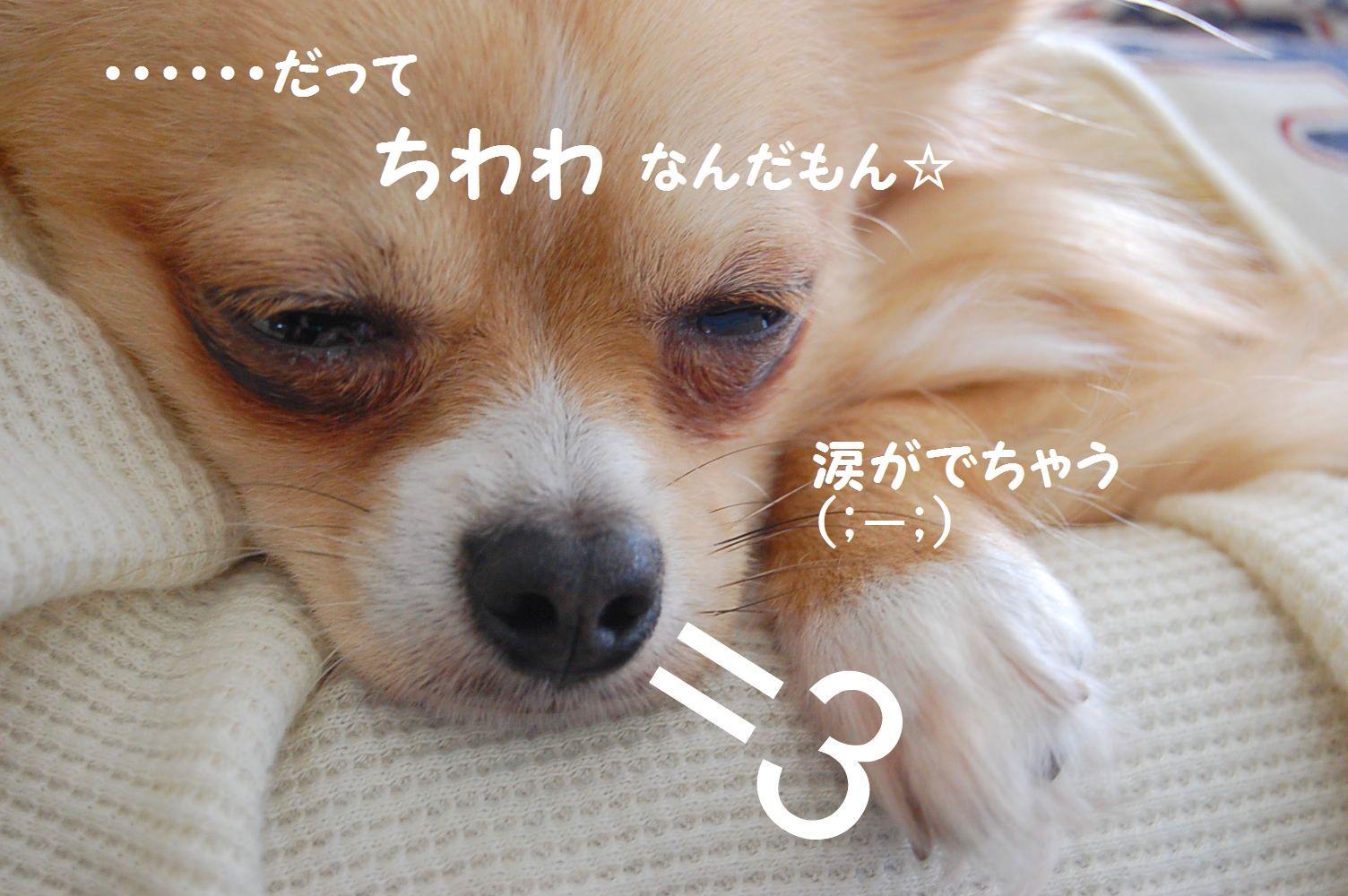 b0112758_23134683.jpg
