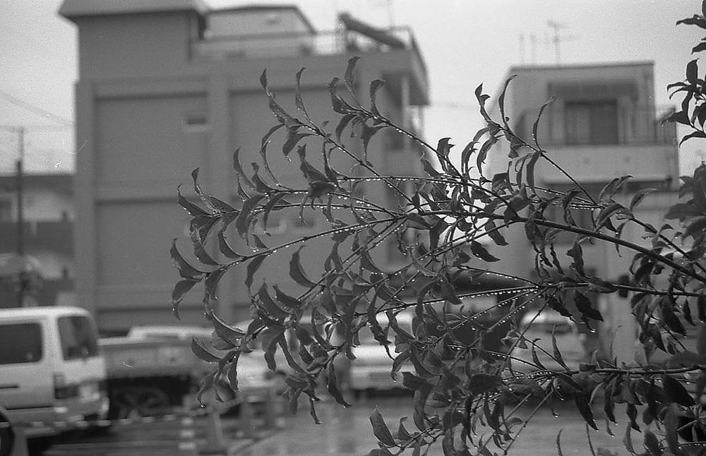 雨_c0030874_7125279.jpg