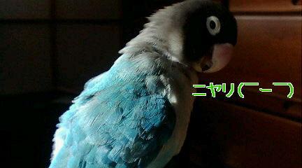 f0126418_1635244.jpg