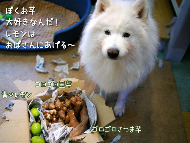 幸せな犬_c0062832_18431661.jpg