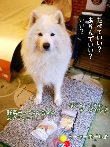 幸せな犬_c0062832_18432728.jpg