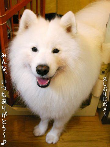 幸せな犬_c0062832_1844852.jpg
