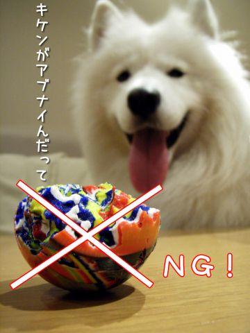 幸せな犬_c0062832_19545052.jpg
