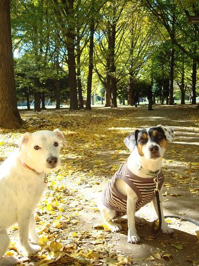 季節の移り変わりと、秋の装い_c0099133_0404714.jpg
