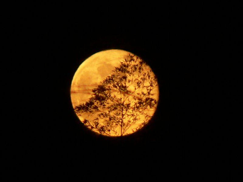 満月を撮影して思うことは。_c0059854_1085921.jpg