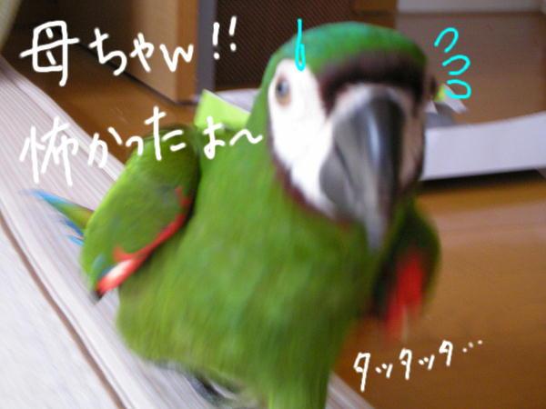 f0132055_121255.jpg