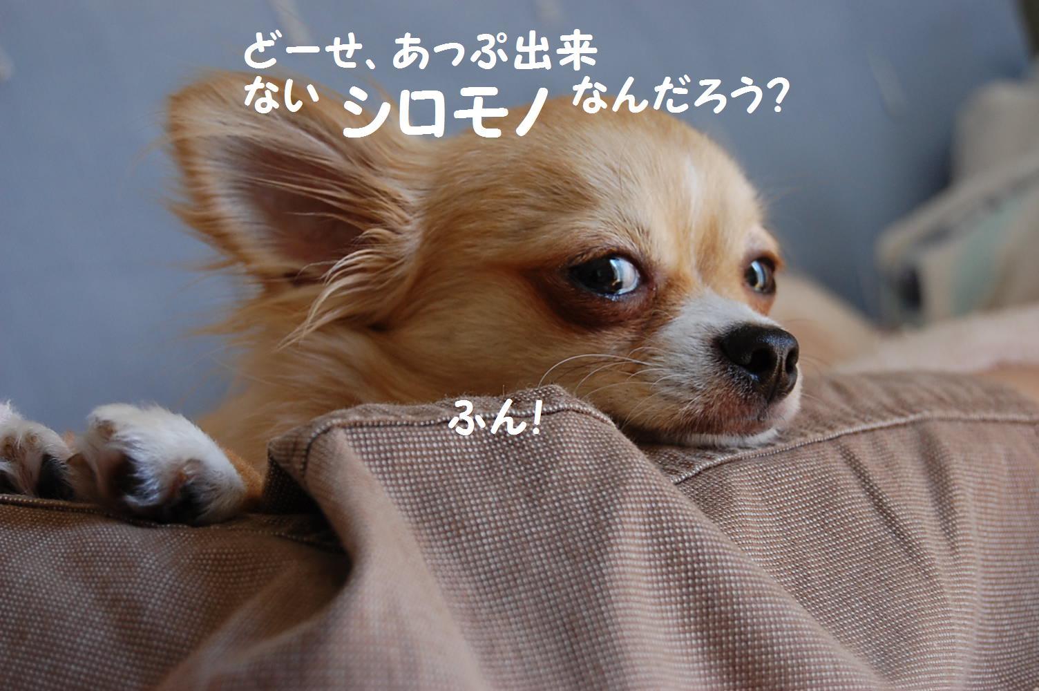 b0112758_22401333.jpg
