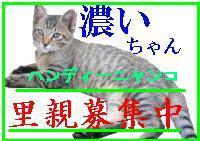 b0059860_1694214.jpg
