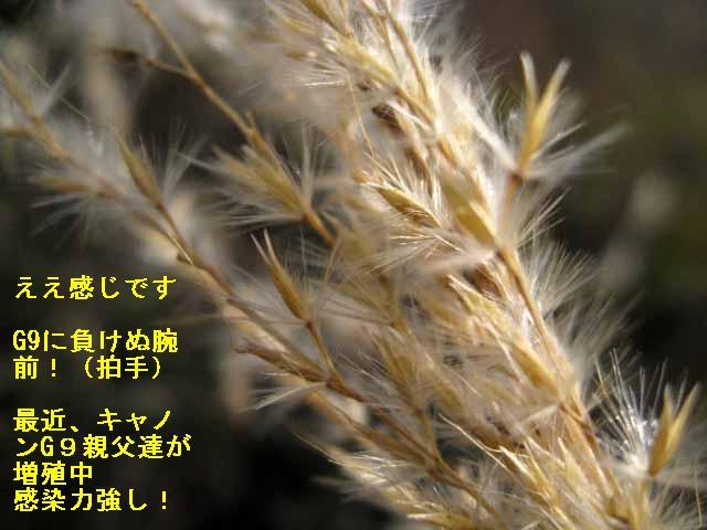 c0153888_15391078.jpg