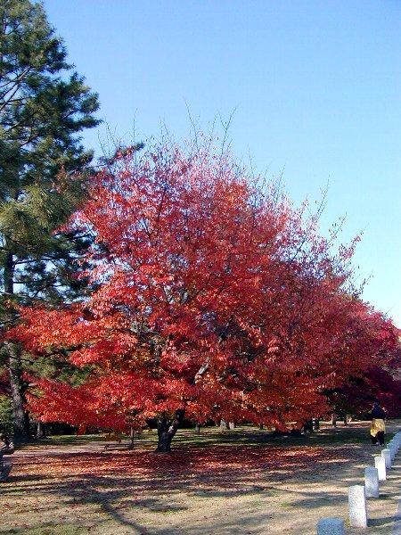 染まり始めた木々たち_c0057390_23152144.jpg