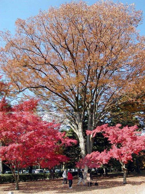 染まり始めた木々たち_c0057390_23153938.jpg