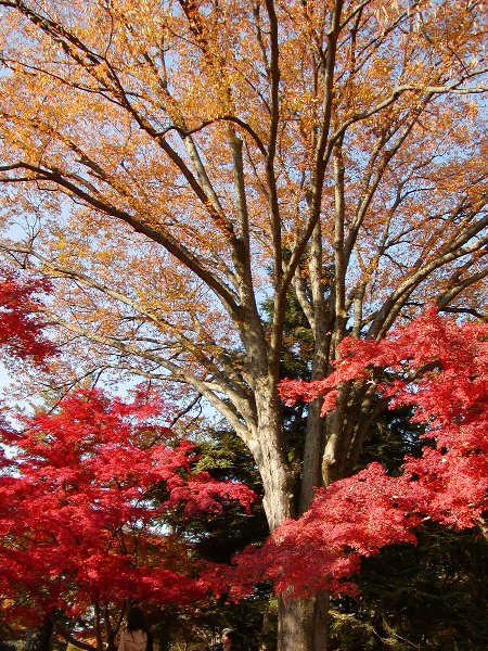 染まり始めた木々たち_c0057390_23155281.jpg