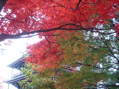 紅葉in京都_c0073813_22501196.jpg