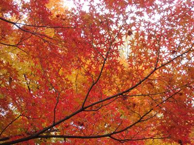紅葉in京都_c0073813_22561058.jpg