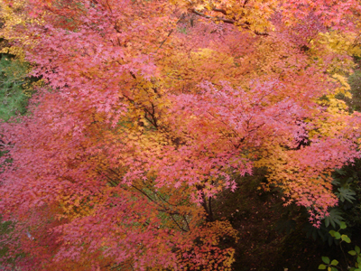 紅葉in京都_c0073813_22572024.jpg