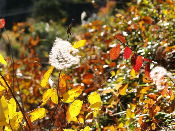 黄色い葉っぱと赤い葉っぱと。。_c0116915_2283653.jpg