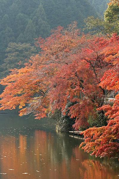 鎌北湖_d0026817_2595760.jpg