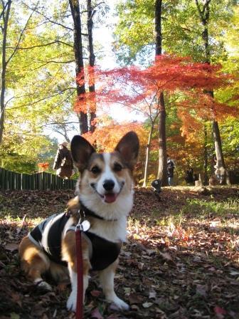 紅葉見★ナイト ~武蔵丘陵森林公園①_f0155118_2343038.jpg